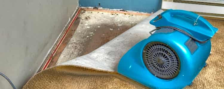 Best Flood Damage Restoration Stirling